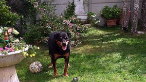 Visite à domicile pour chiens, Bassin d'Arcachon