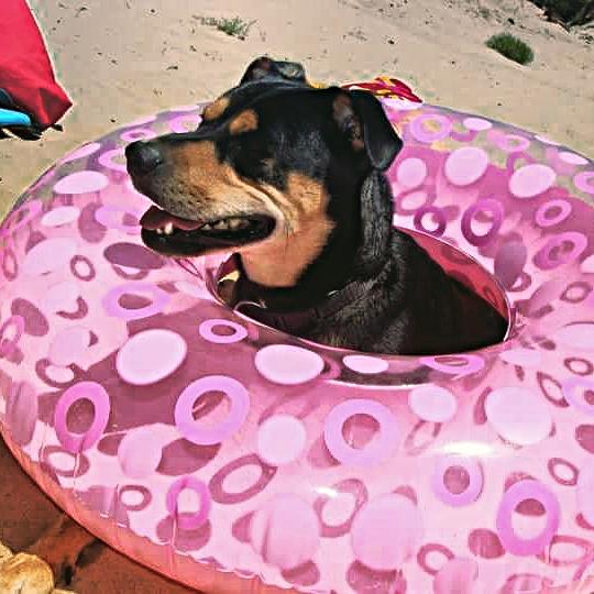 Plages autorisées aux chiens sur le Bassin d'Arcachon